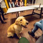 Dzīvnieki birojā veicina veselīgus paradumus fotoattēls
